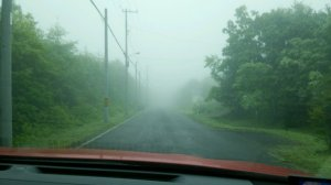 一日中、霧が晴れなかった・・・。これで、ホントに「夏至」なんだろうか?